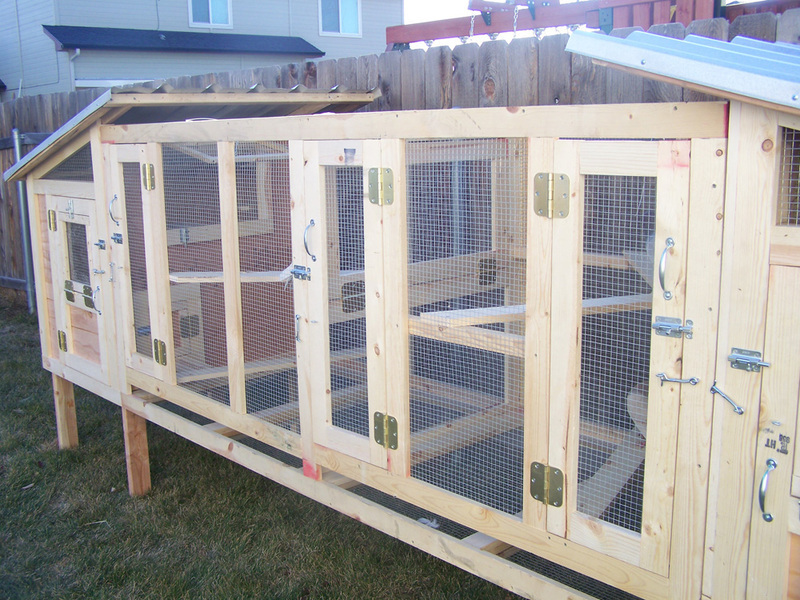 Custom Coop For Pigeons